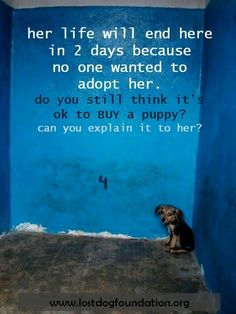 reality. don't support breeders ('professional' or 'backyard') or puppy mills and pet stores which sell pets. Educate yourself about homeless pets.