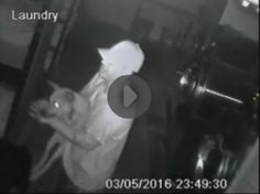 **INFORMATION NEEDED!** Man breaks into Arizona shelter and steals a young dog