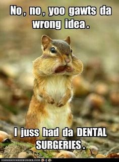 """Should we all stop saying """"You're gonna swell up like a chipmunk?"""" Smile Savvy, dental internet marketing @ www.smilesavvy.com #SmileSavvyInc #dental-internet-marketing"""