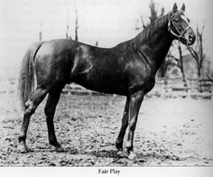 1920, 1924, & 1927 - LEADING SIRE IN AMERICA - FAIR PLAY