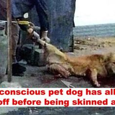 Made in China: Stolen pet dog has limbs cut off before being skinned alive! Act Now!