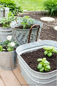 5 simple tips for successfully growing herbs in containers. Includes a list of h. 5 simple tips for successfully growing herbs in containers. Includes a list of herbs that can be planted together & ways to use herbs in your everyday life. Herb Containers, Container Garden Design, Plants, Organic Gardening, Herbs, Growing Herbs, Herb Garden, Garden Design, Gardening Tips