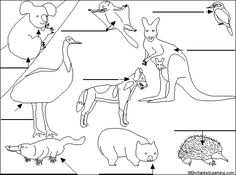 Australian animals to label
