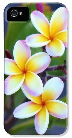 Backyard Plumeria iPhone5 Case