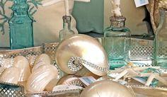 beautiful shell display