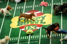 https://docs.google.com/document/d/1YfQtA1iv5ighNzABVPkvZ6__5Jp5qxO9sjvAxVPf_IU/edit?usp=sharing  link to a create your own Puppy Bowl fantasy league/team