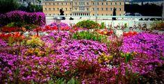 Ένας κήπος με μια... δόση κάνναβης στην ταράτσα του υπουργείου Οικονομικών!