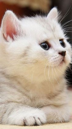 Beautiful Markings - Click to see loads of great pictures of cats and kittens to brighten your day. >>> More info could be found at the image url. #allaboutcats