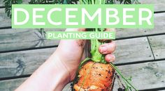 Your December Edible Planting Guide - Australia Wide! Summer is such an awesome time to be in the patch... & tomatoes are literally just the beginning!