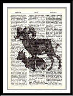 paperink id: animal019 Big Horn Sheep Animal Dictionary Art Print Vintage Upcycled Art Mixed Media Art Print Illustration printed on an original vintage three column dictionary page using Epson DURABr