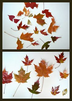 Fall Leaf Puzzles