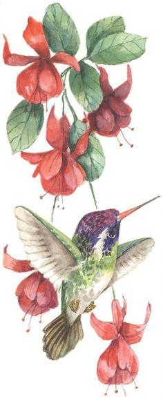White-Eared Hummingbird with Fuchsia 12 x 6 lithograph
