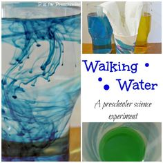Walking water - a fun color-mixing science experiment for preschoolers