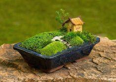 Jardin Zen Miniature, Mini Jardin Zen, Mini Zen Garden, Pot Jardin, Miniature Fairy Gardens, Garden Art, Micro Garden, Garden Villa, Garden Oasis