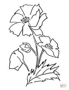 Plant de pavot | Super Coloring