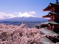 mount fuji japan cherry blossoms