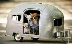 Viajeros!!