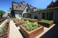 Raised bed vegetable garden | Conte & Conte, LLC