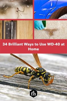You already use WD-40 to loosen bolts and stop squeaking hinges, but did you know it could do these other amazing things? Wd 40 Uses, Bathtub Repair, Buying A New Home, Car Detailing, Amazing Things, Organization Hacks, Cleaning Hacks, Life Hacks, Lifehacks