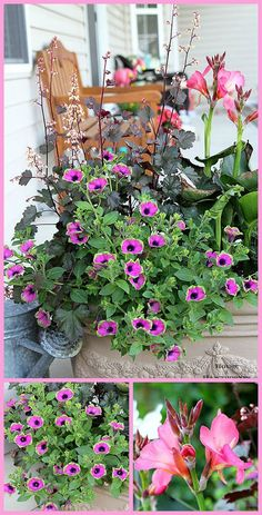There's lots of color for your summer garden in this festive porch planter. A mix of annuals and perennials, including Coral Bells, Cana and Supertunia Pretty Much Picasso. Plus you can remove the perennials in the fall and plant them in the ground to be enjoyed for years to come!