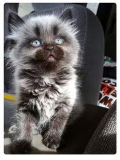 Is it a ware wolf or a beautiful kitten