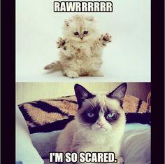 Grumpy cat rawr