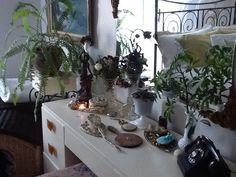 :-)) Mon Cheri, Plants, Flora, Plant, Planting