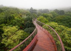 Sinuous wooden walkway that meanders through the treetops of a botanical garden.