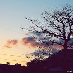 風冷たい 夕暮れ時の おしゃんぽ 楽し   by mon_ami_2000