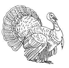 Turkey Coloring page in 2020 | Turkey drawing, Turkey ...