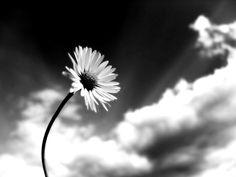 Dedicada al cielo...