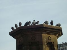 Pigeons at the canal