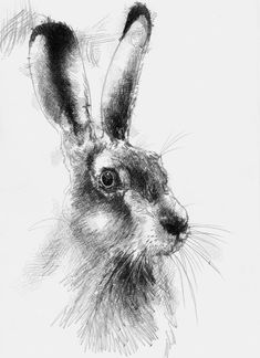 Artist Sean Briggs producing a sketch a day Hare again #art #drawing #hare…