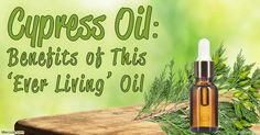 The fragrant cypress oil has been used for centuries as a medicinal oil – discover more about this herbal oil, including its benefits, uses, and composition. http://articles.mercola.com/herbal-oils/cypress-oil.aspx