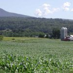 GMO Corn Bathed in Glyphosate is Now Vermont's Top Crop