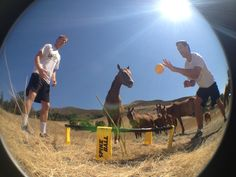 Even horses love Spikeball!