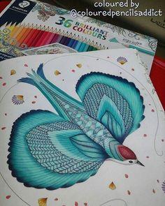 Mila Marotta's Animal Kingdom - Bird