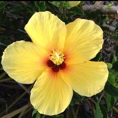 A Hawaiian flower!
