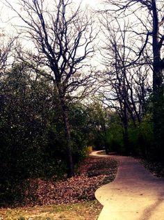 #trees #pathway