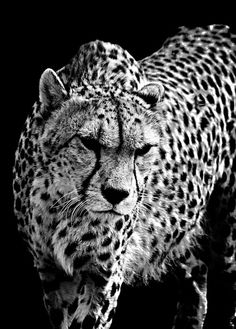 #BwLovedByPascalRiben - ALL ANIMALS IN B&W on http://www.pinterest.com/pascalriben
