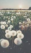 Resultado de imagen de tumblr photography flowers hipster