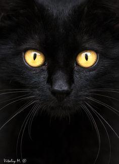 black cat by Vitaliy Mytnik on 500px