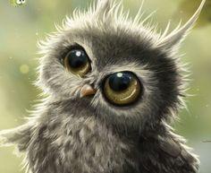 Disgrunteled owlet