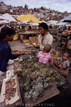 Vendeuse de plantes médicinales, Antananarivo, Madagascar