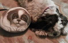 This is a hand-painted rock of our Shih Tuz. By Dixie Andrew