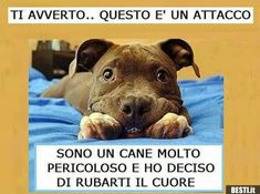 Ti avverto Cute Cats And Dogs, Animals And Pets, Dogs And Puppies, Funny Animals, Cute Animals, Love My Dog, Pitbulls, Little Dogs, Dog Cat
