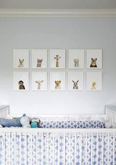 cadres avec des photos de petits animaux