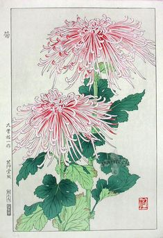 Artist Osuga Yuich Japanese Woodblock Print Name Kiku (Chrysanthemum) Approx Image Size Height cm x Width cm (H x W Date Originally published in Showa mid-term era by Unsodo. This is a later edition from the original blocks. Condition Only perfect Art And Illustration, Illustrations, Botanical Drawings, Botanical Prints, Art Floral, Gravure Photo, Illustration Botanique, Art Japonais, Japanese Flowers