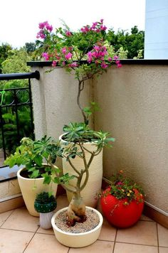 balcony garden decor Fine 128 Garden On Small Balcony Apartment Balcony Garden, Small Balcony Garden, Balcony Plants, House Plants Decor, Terrace Garden, Indoor Plants, Balcony Ideas, Small Balconies, Patio Plants