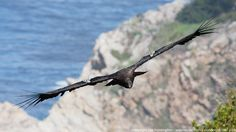 http://webnectar.com/ photography, this amazing site showcases condors, Big Sur, nature on the California coast at it's most primal!